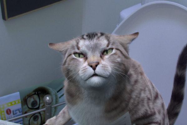 cats meow cat growl
