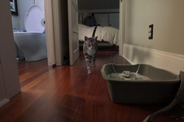 cats meow cat walk