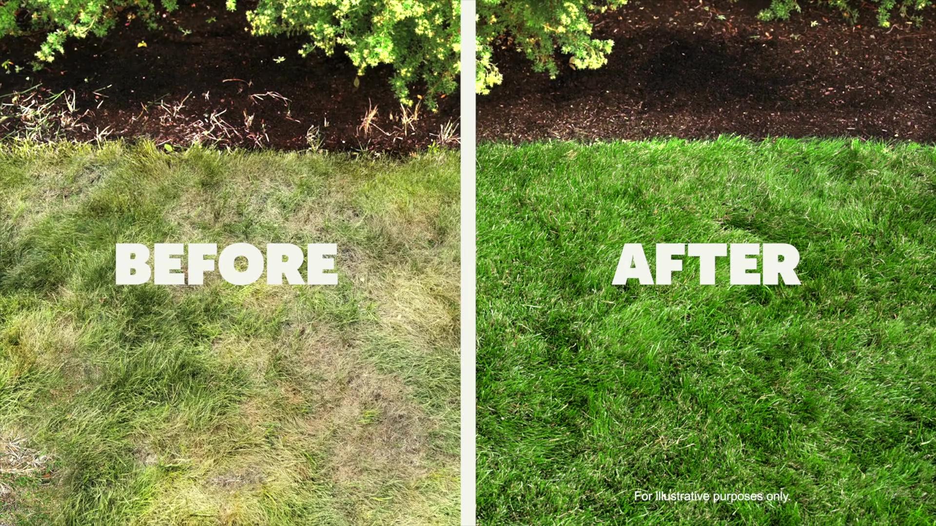 pennington grass 3 after