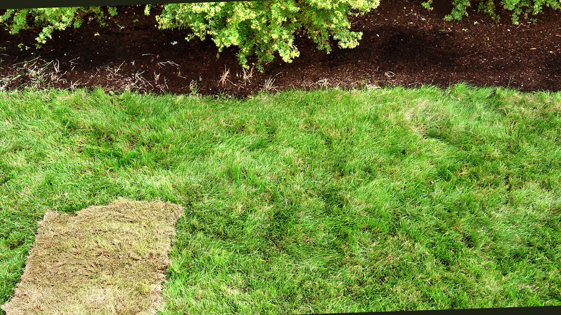 pennington grass 3 before