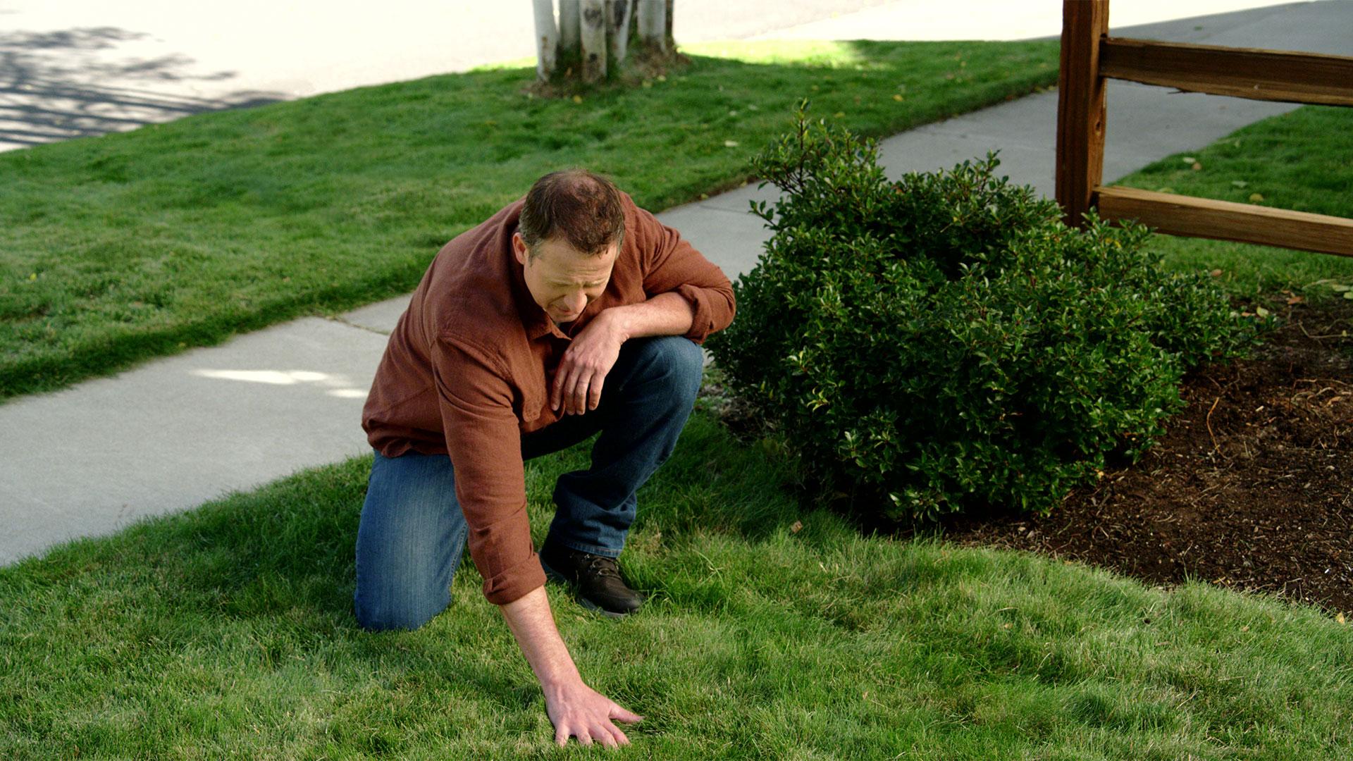 pennington grass 4 after