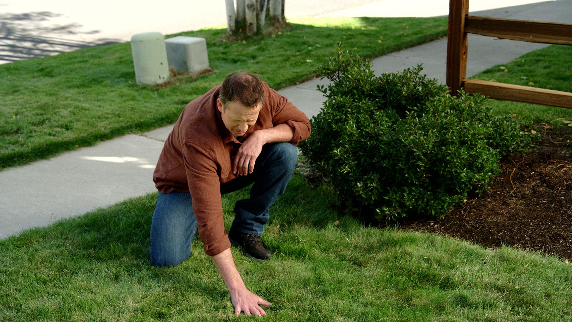 pennington grass 4 before