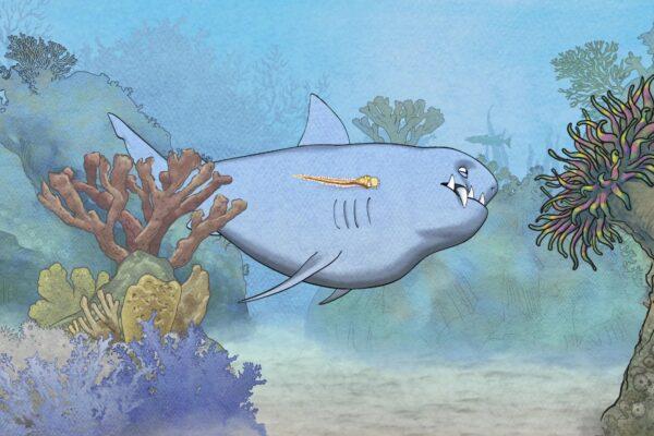 sharkly-7