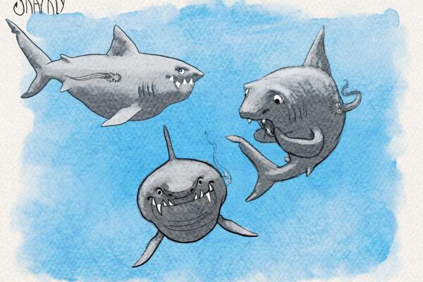 sharkly-design
