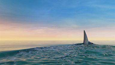 thumb sharks