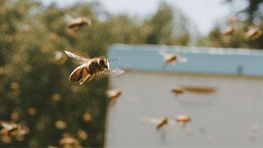 thumb upmc beekeeper 2
