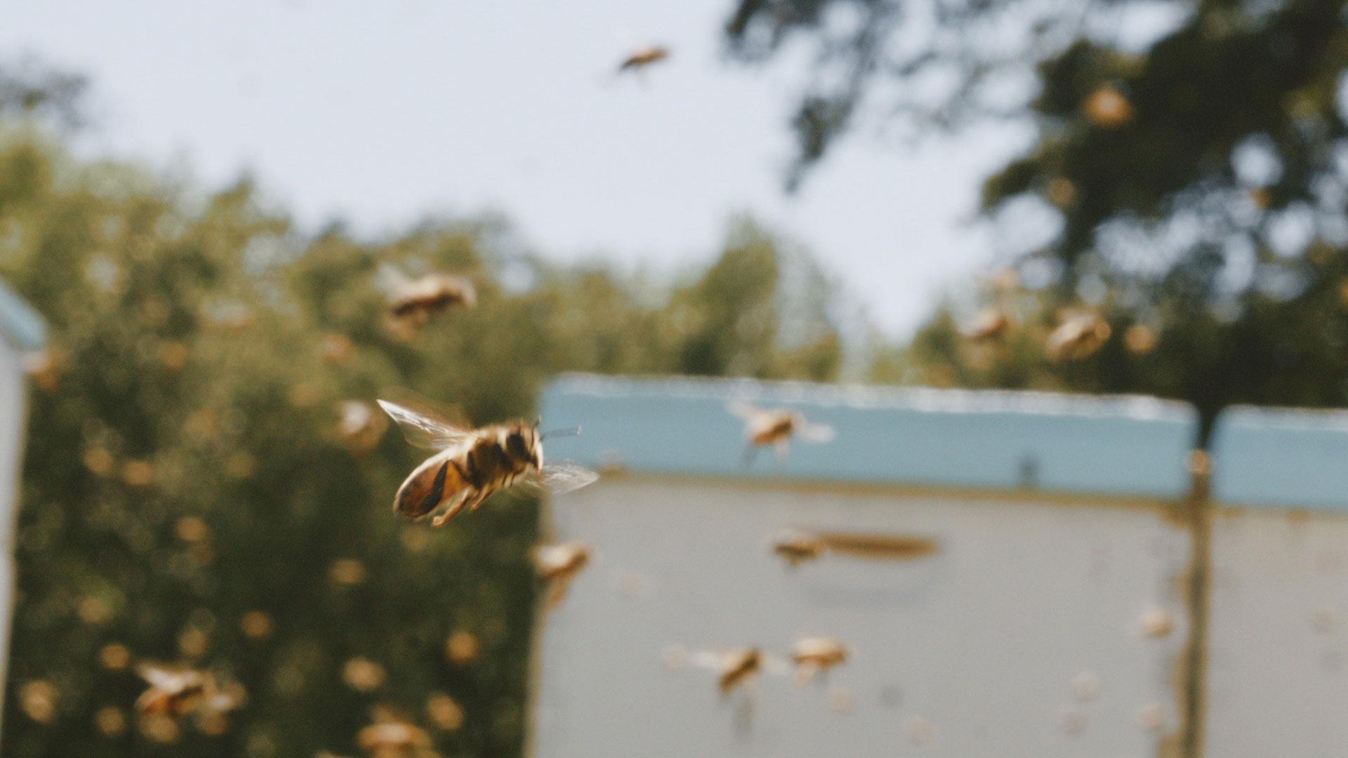 upmc beekeeper 2