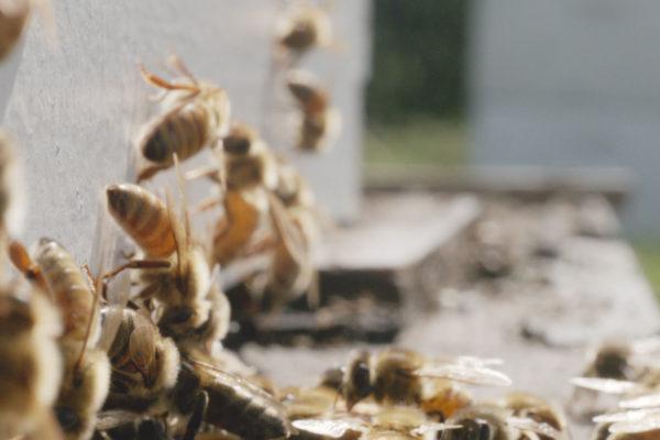 upmc beekeeper 5